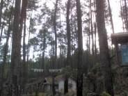 hutan-pinus_2.jpg